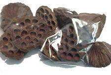 10 x MEDIUM SIZED DRIED LOTUS SEED PODS CHRISTMAS WREATH DECORATIONS