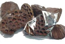 10 X Large Dried Lotus Pod Seed Heads - Wreath Christmas Decoration Festive