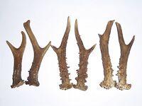 3 PAIRS OF ROE DEER ANTLERS  12cm.-15cm.