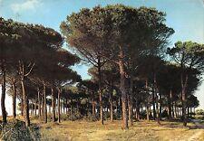 BT1088 cervia milano maritima la pineta italy