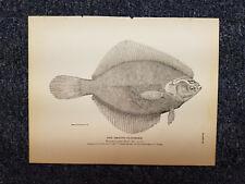 Rare Antique VTG Flounder Fish Aquatic Book Plate Art Print The Smooth Flounder