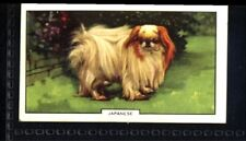 Gallaher Dogs 2nd Series 1938 - Japanese No. 16