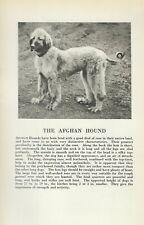 Afghan Hound - 1931 Vintage Dog Print - Breed Description - Matted