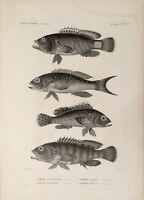 Framed Print - Antique Fish (Victorian Picture Sea Life Ocean Animal Poster Art)