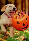 Puppy With Pumpkin Bucket Avanti Cute Dog Halloween Card photo