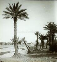 Maghreb Marocco Algeria Tunisia c1900, Foto Stereo Vintage Placca Lente VR8L2