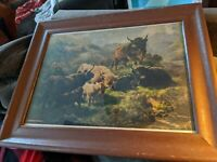 ANTIQUE 1903 HIGHLAND CATTLE BREEDERS GAZETTE PRINT RARE WOOD PICTURE FRAME 14X