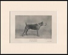 AIREDALE TERRIER OLD 1920'S NAMED DOG PRINT MOUNTED READY TO FRAME