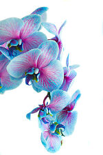 BEAUTIFUL BLUE ORCHIDS CANVAS PICTURE #36 STUNNING FLORAL HOME DECOR A1 CANVAS