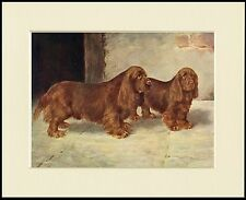 SUSSEX SPANIEL DOGS LOVELY DOG PRINT MOUNTED READY TO FRAME