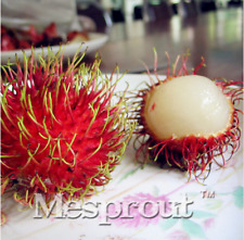 5pcs Rambutan Seed Red Fruits Tropical Fruit Seeds Plant Outdoor Tree