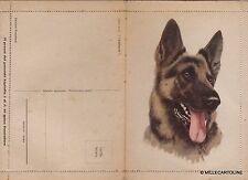 # ANIMALI: CANE LUPO SU BIGLIETTO POSTALE ANNI '50 - siglaya S.R.
