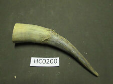 Cow horn Carving, crafts, farm animals dog chews Hc0200