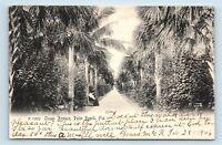 Palm Beach, FL - c1906 UDB STREET SCENE - OCEAN AVENUE - POSTCARD - B2