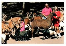 Alpaca Deer Goats Postcard Catskill Game Farm New York Lower Feeding Ground