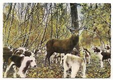 scène de chasse a courre   en foret d'orléans    l'hallali    a.i