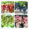 50 PCS Seeds Gold Finger Grape Bonsai Organic Delicious Fresh Fruit Garden NEW S
