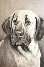 Jean Bungartz GREAT DANE 1890 Antique Engraving DOG Art Print Matted