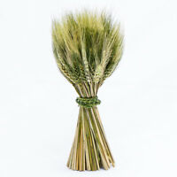 Richland Preserved Stand Up Wheat Bundle Fall Harvest Bouquet Event Decor Home