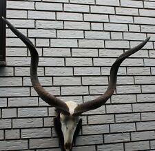 Afrikanische Kudu Antilope auf Brett Jagd Hirsch Afrika