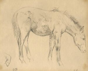 Otto Bache, drawing. A study of a young horse, c1880
