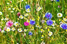Otras plantas, semillas y bulbos margas