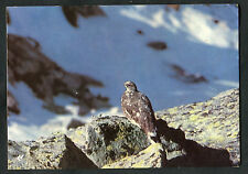 Posted 1977 from France: A View of a Partridge