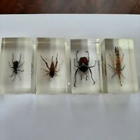 VTG  Real Beetles in resin glass. Paperweight. Insect, taxidermy. Lot 4 pcs.
