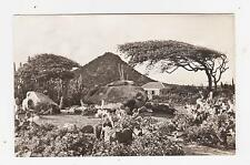 RPPC,Aruba,Dutch West Indies,Hooiberg,Dividivitree,Park,The Caribbean.c.1950s