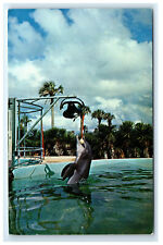 Postcard Trained Porpoise (Dolphin) Rings Bell at Marine Studios, Fl C37