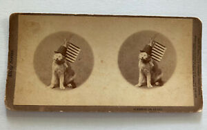 Ma. John Soule of Boston Kitty Series Sleeping On Guard American Flag Cat 1871
