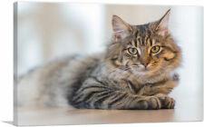 Artcanvas Maine Coon Male Cat Home decor Canvas Art Print