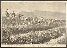 IMAGE 1888 ENGRAVING JAPON JAPAN NIPPON CUEILLETTE DU THE