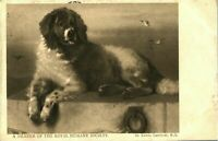 Dog portrait postcard antique A Member of the Royal Humane Society Landseer