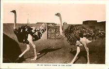 KHARTOUM Sudan): An Ostrich Farm in the SudanRP-VICTORIA STATIONERY & BOOK STORE