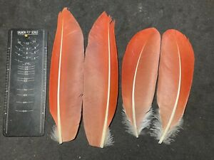Prime Scarlet Ibis wing pairs SUPERB! - rare classic salmon fly tying feathers