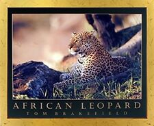 African Leopard Wildlife Jungle Animal Wall Decor Framed Picture Art Print 18x22