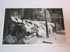 PETRIFIED FOREST THE MONARCH CA VINTAGE POSTCARD   T*