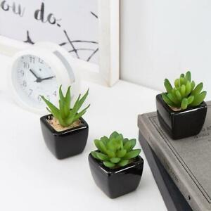 Modern Home Decor Mini Succulent Artificial Plants w/ Square Black Ceramic Pots