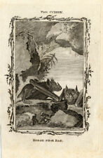 Antique Print-HORSESHOE BAT-Bell-Smellie-Buffon-1785