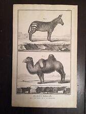 Benard Direxit Histoire Naturelle Mammals Circa 1780 France Engraving Animal Art