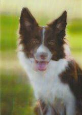 3 -D - Ansichtskarte: Border Collie - schönes Hunde - Porträt