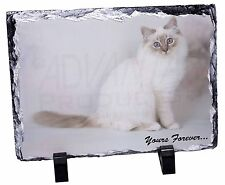 Birman Cat 'Yours Forever' Photo Slate Christmas Gift Ornament, AC-47ySL