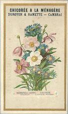 Chromo Chicorée A la ménagère langage des fleurs Anémone Aster