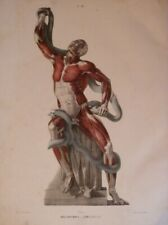 FAU Anatomie Corps Humain ART TEXTE + ATLAS 25 PLANCHES COULEUR ECORCHES LAOCOON