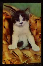 c.1960 vintage chrome smudge nose kitten in woven hat cat postcard