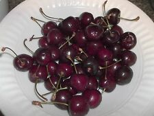 60 SWEET CHERRY ORGANIC SEEDS, PRUNUS AVIUM, WILD CHERRY,GEAN