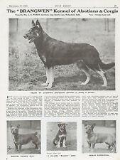 GERMAN SHEPHERD CORGI OUR DOGS 1943 DOG BREED KENNEL ADVERT PRINT PAGE BRANGWEN