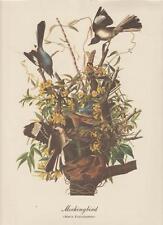 "Audubon Mockingbird Art Print Best Loved 9"" x 12"" Vintage 1970"