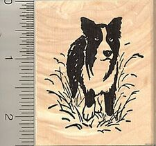 Border Collie in Field Rubber Stamp H8406 Wood Mounted